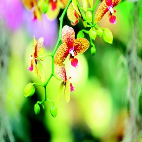 ashleigh-burwood-japanese-orchid-geurlamp-vloeistof-assortiment