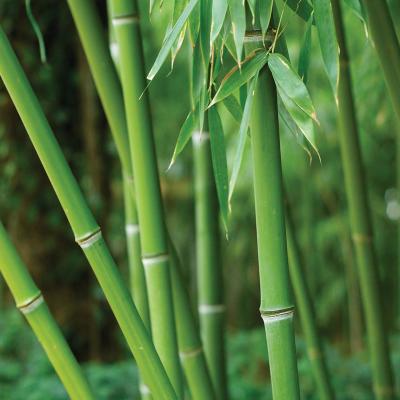 ashleigh-burwood-green-bamboo-geurlamp