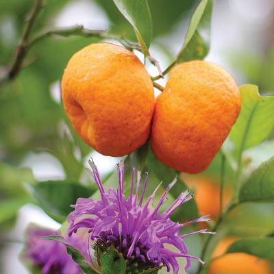 ashleigh-buwood-mandarin-bergamot-geurlamp