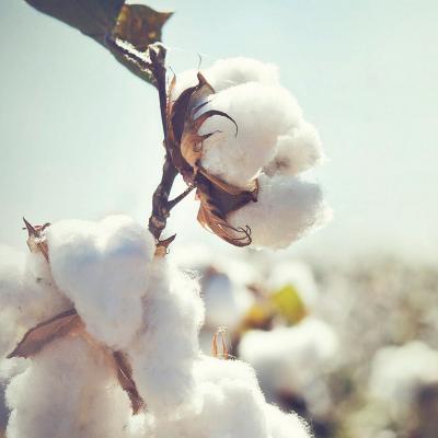 ashleigh-burwood-soft-cotton-geurlamp